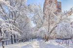 Снежень