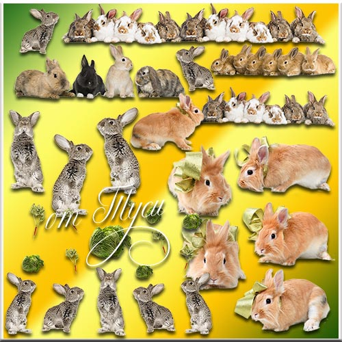 Кролики - Клипарт
