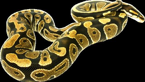 Рептилии и земноводные