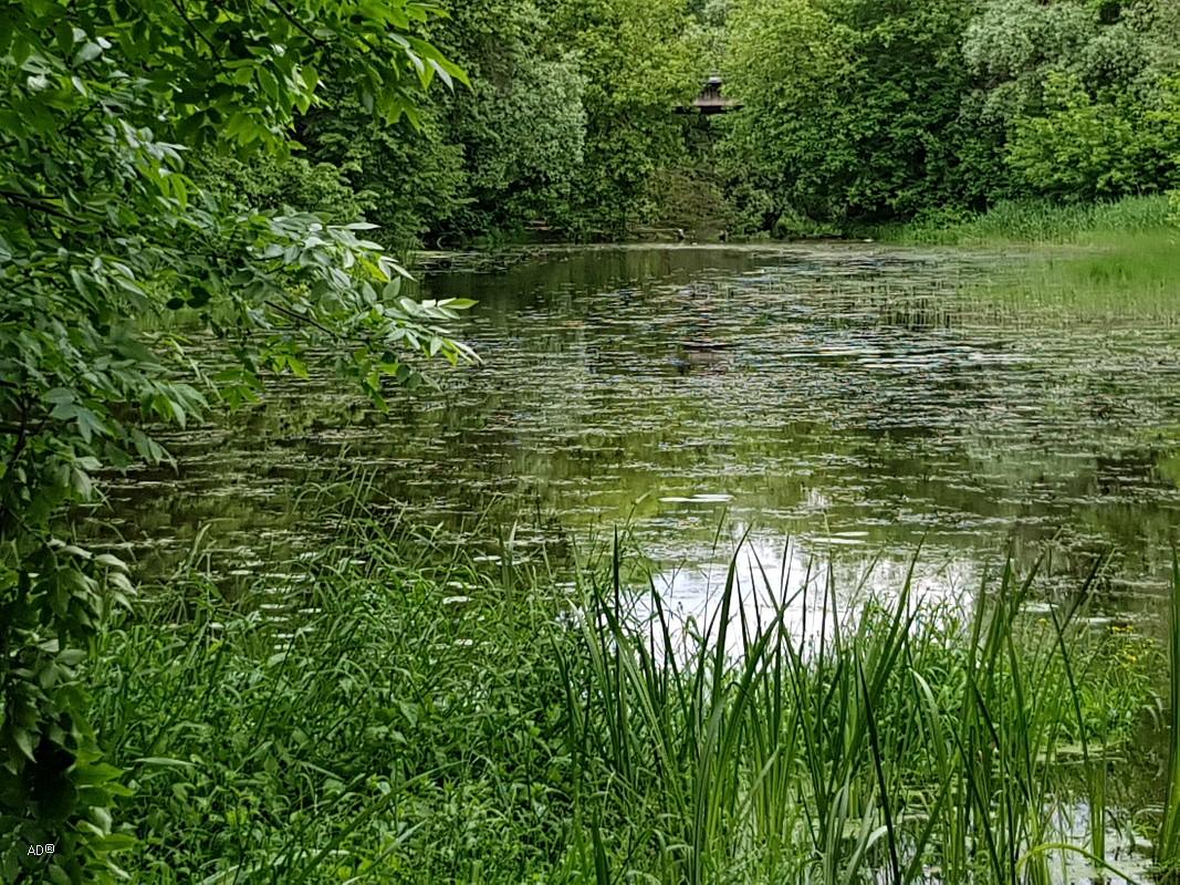 Клин, река Сестра