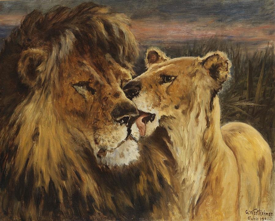 Couple de lions.