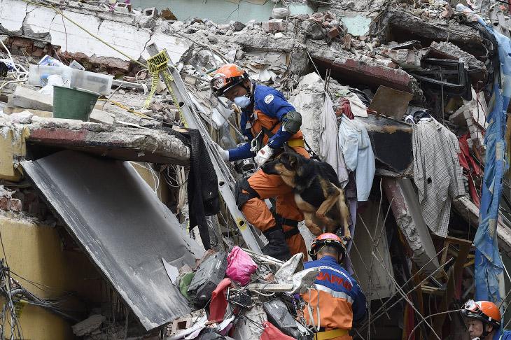 2. Четвероногий спасатель, Мексика, 10 сентября 2017. (Фото Edgard Garrido | Reuters):