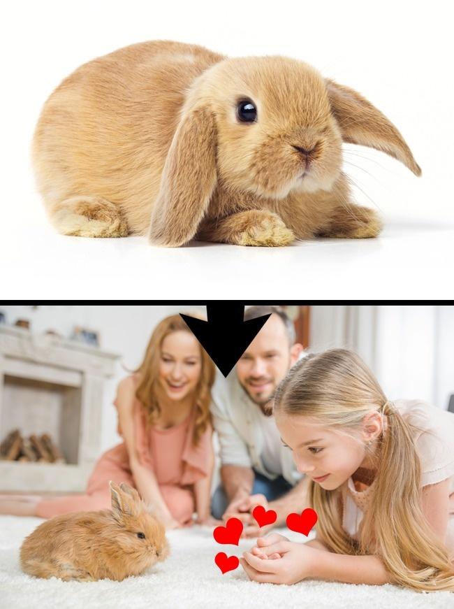 © depositphotos  © depositphotos     Карликовых кроликов идругих мелких грызунов «