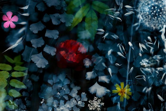 Удивительный мир макросъёмки: Снимки, так похожие на сюрреалистические картины