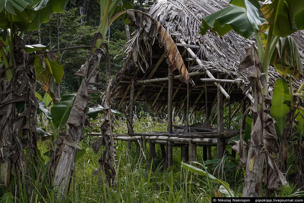 Второе путешествие в племя Файу. Лес. через, орган, шлёпкам, разодранным, деревни, последний, грязь, райских, стволы, Когда, джунглям, птицы, сигареты, около, Дироу, снова, когда, глаза, вдруг, тропа
