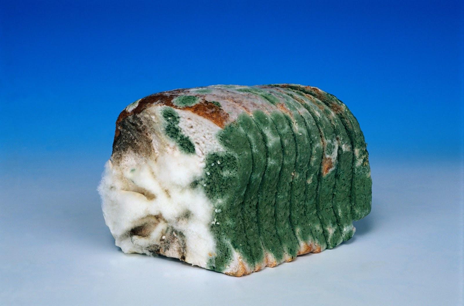 Что будет, если есть хлеб с плесенью?!