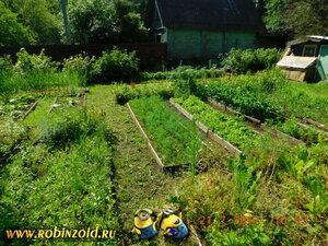 огород вид сбоку