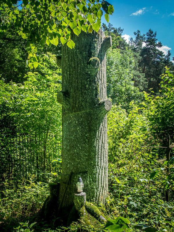Каменный дуб.