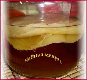 Чайный гриб или чайная медуза