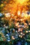 Фото Алексей Торопов. Монокль 33 мм, Fujifilm S3 Pro