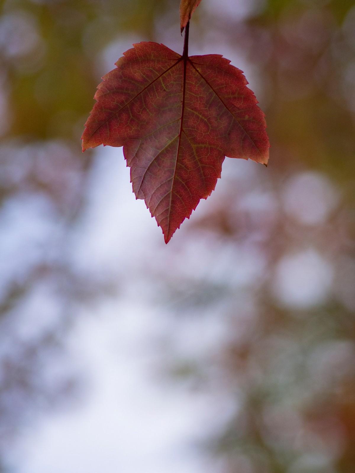 Красивые осенние снимка  Аарона Бурдена