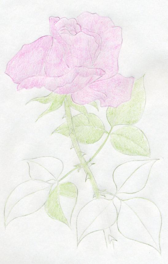 Урок рисования в 1 классе на тему: ветка с осенними листьями по памяти мягкими или жёсткой формы