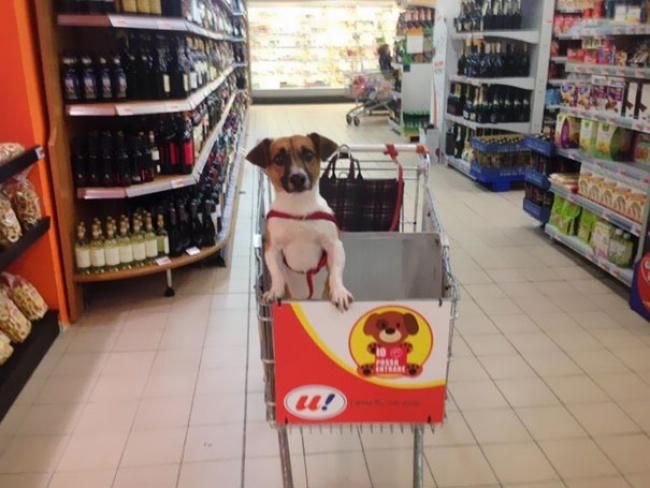 Если вынехотите оставлять свою собаку увхода вмагазин, небеда— тут вы