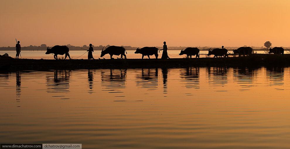 Бирма . Обычный день на озере Инле: