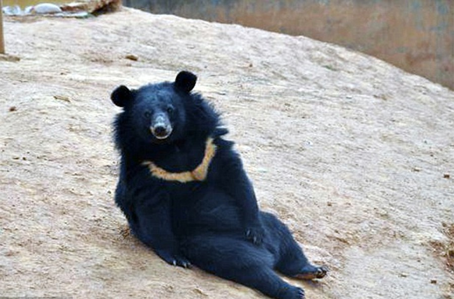 3. Медвежата выросли и стали не очень похожи на собак.