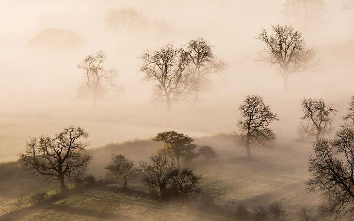Сквозь туман (18 фото)