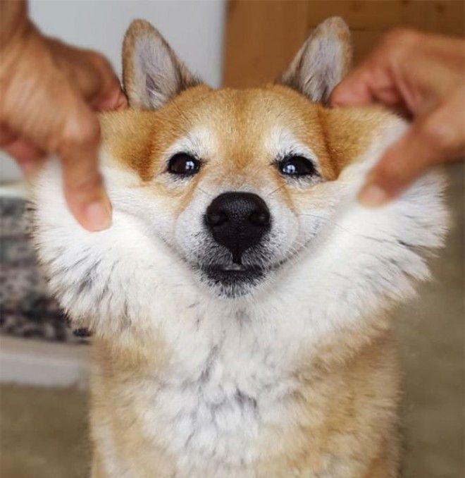 18 чудесных собак, которых так и хочется затискать