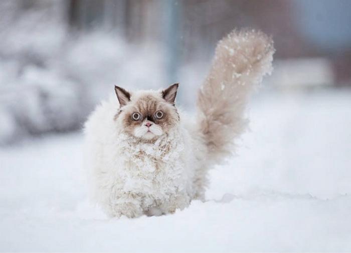 А снег идёт: забавные фотографии животных, которые в первый раз увидели снег (21 фото)