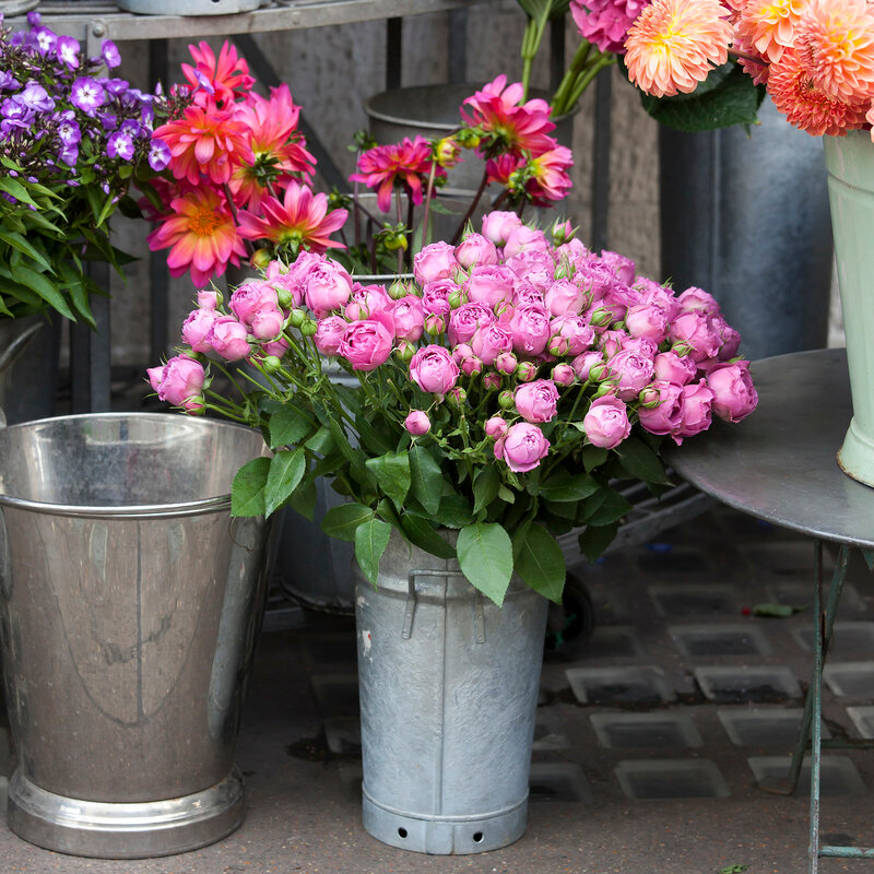 the Bouquet of lilac roses in a galvanized bucket as decoration of the entrance to the store