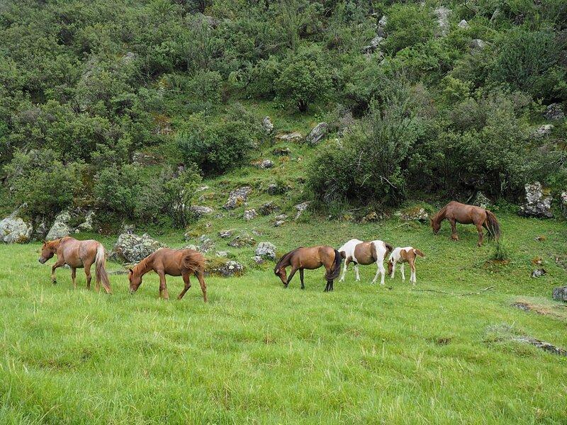 Россия, Горный Алтай – лошади (Russia, Altai Mountains – horse)