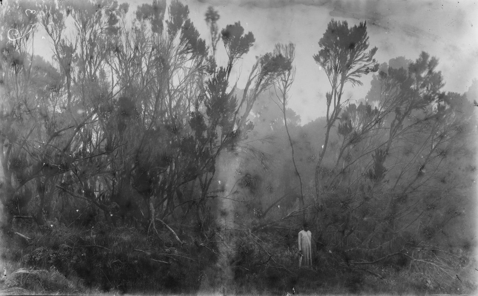 362.  Верхняя граница джунглей в районе Килиманджаро