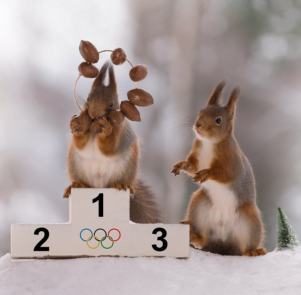 Белки готовятся к Зимним Олимпийским играм