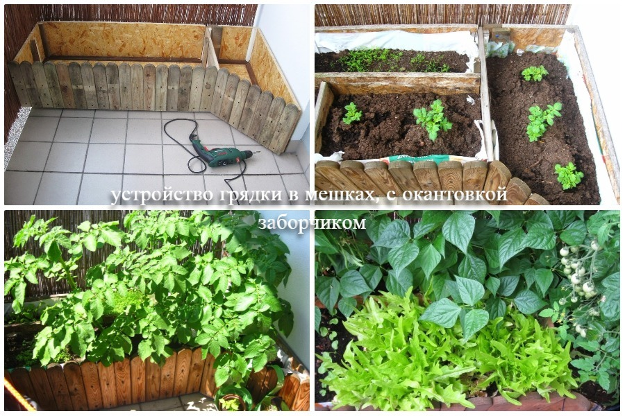 Посадка овощных культур в грядки без грядки