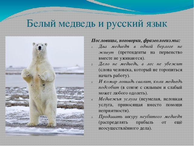 27 февраля Международный день полярного медведя