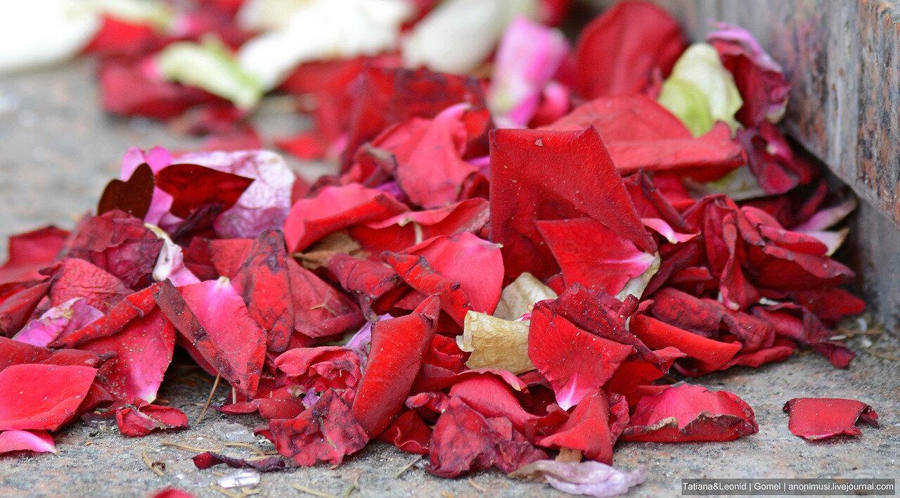 Лепестки опавшиз роз