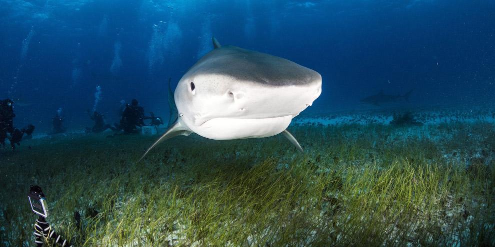 5. Тем не менее, с огромной рыбой можно вполне безопасно рядом плавать. Причина проста: челов