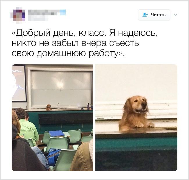 © dog_rates/twitter      13.