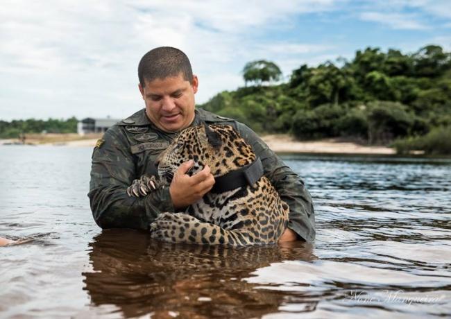 © None Mangueira/facebook     Солдаты бразильской армии нашли еле живого маленького ягуар