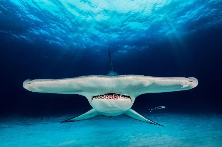 Победители конкурса подводной фотографии 2018 (28 фото)