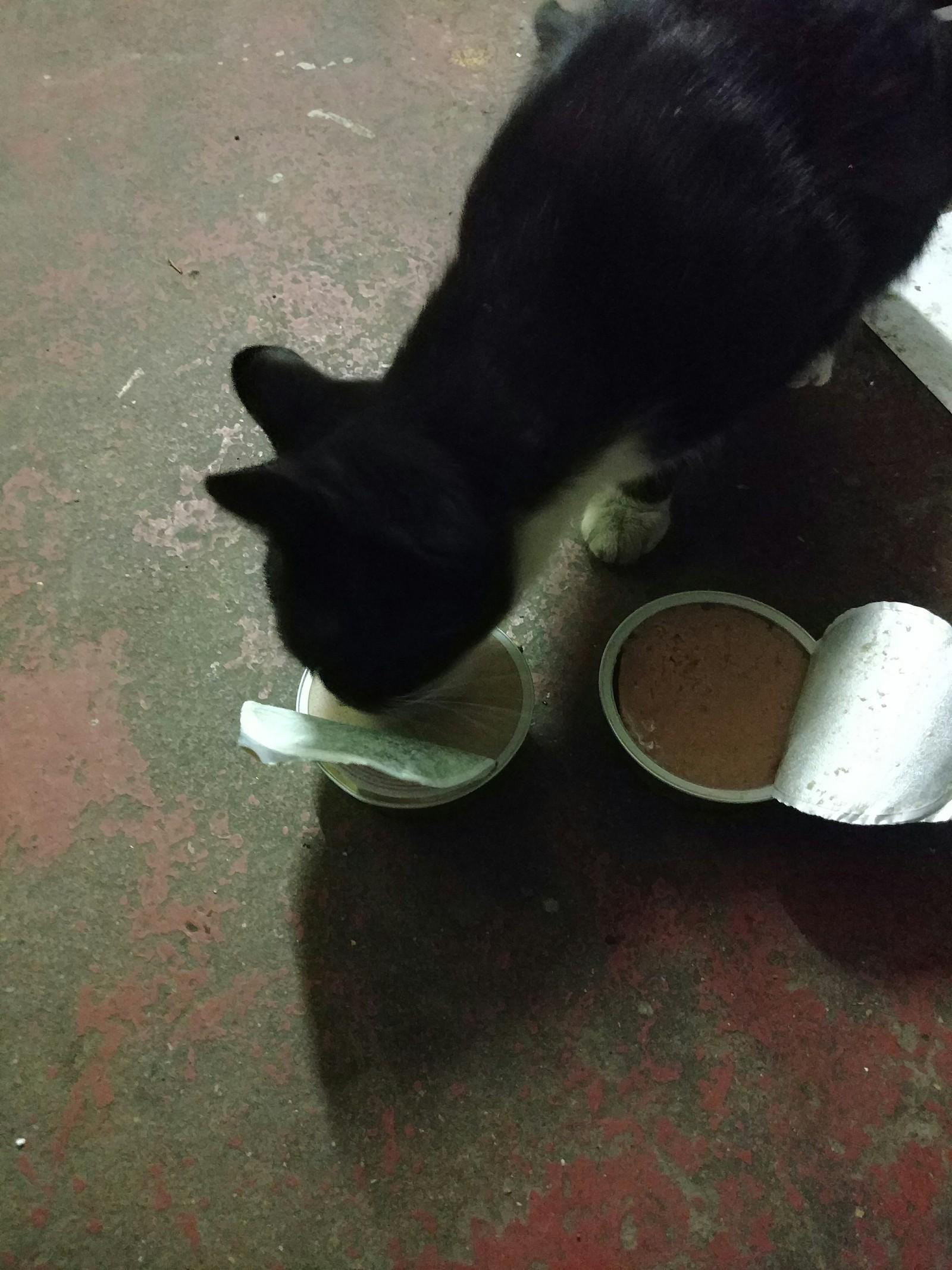 Паштет для человека VS корм для кошки