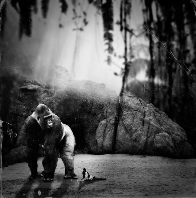 Surreal Photo Manipulator - Crille