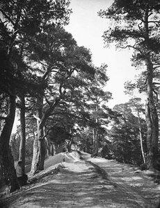 Городецкие валы. 1894