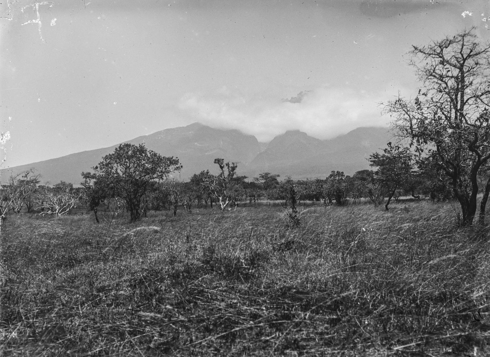 271. Пейзаж с Килиманджаро