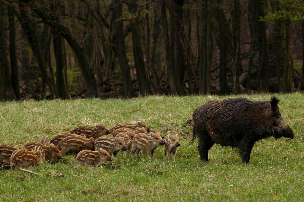 Lainzer-Tiergarten6.jpg
