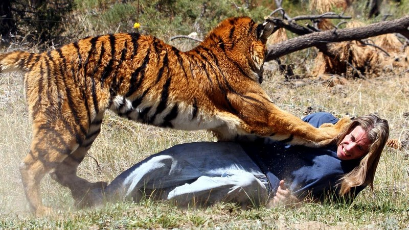 Случаи, когда затаившие обиду животные стали мстить людям