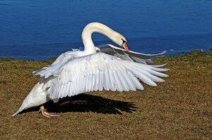 По берегу птица гуляла