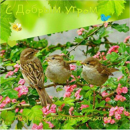 https://img-fotki.yandex.ru/get/768433/131884990.f3/0_160bc5_badc10c4_L.jpg