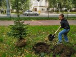 "Участие в акции ""Посади дерево"". 1 а класс."