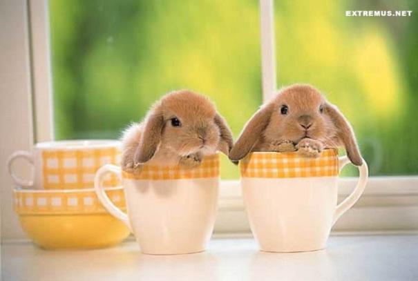 Большая фото-подборка самых милых кроликов