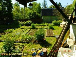 утренний огород