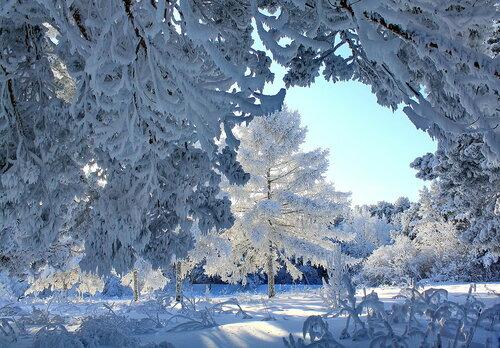 Деревья все в белых ажурных узорах!