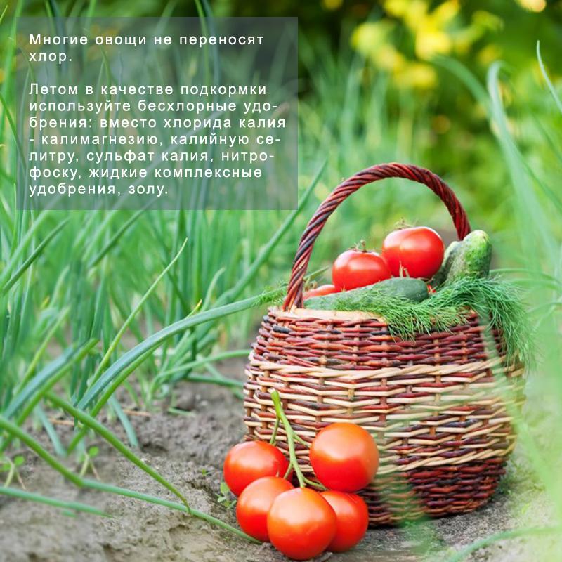 Влияние хлора на растения