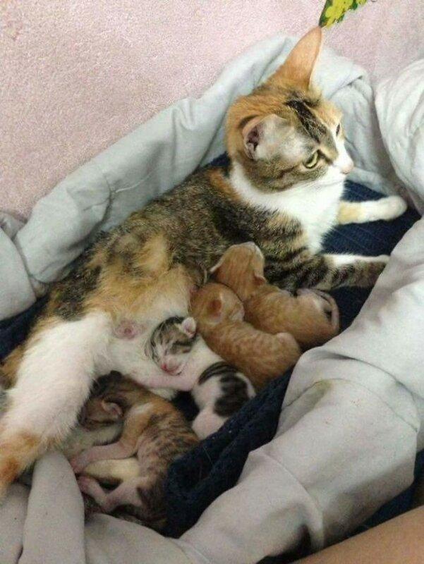 Кот поддержал кошку во время родов