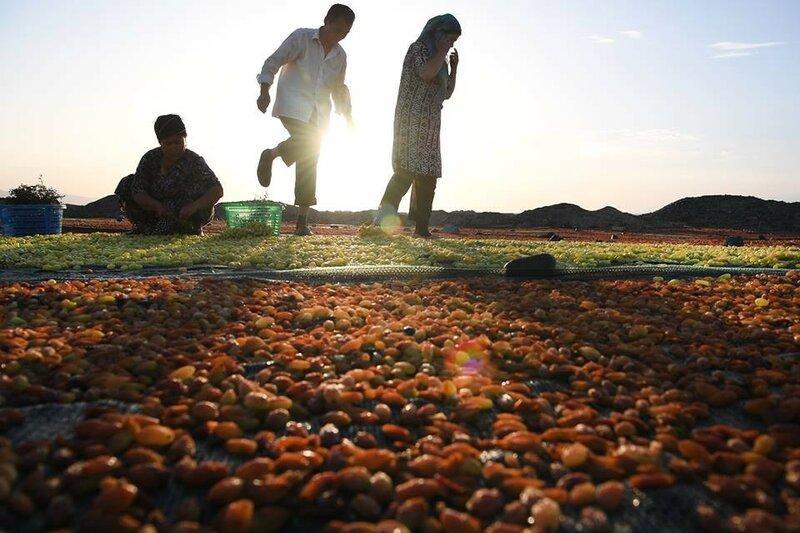 0 20e666 1267278 XL Турфанская долина виноградников в китайском оазисе посреди пустыни
