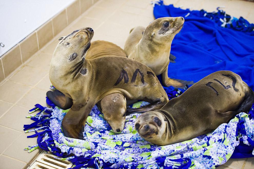 4. В службу спасения животных (да, тут есть и такая) постоянно поступают звонки от отдыхающих
