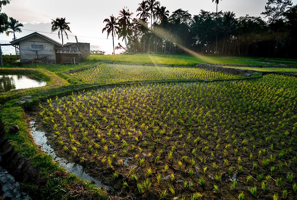 23. На берега Манинджао опускается вечер, поля пустеют, люди спешат в мечети и по своим жилищ